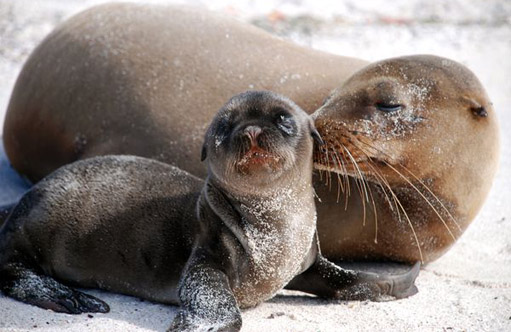 110430.sea-lion-kiss.jpg
